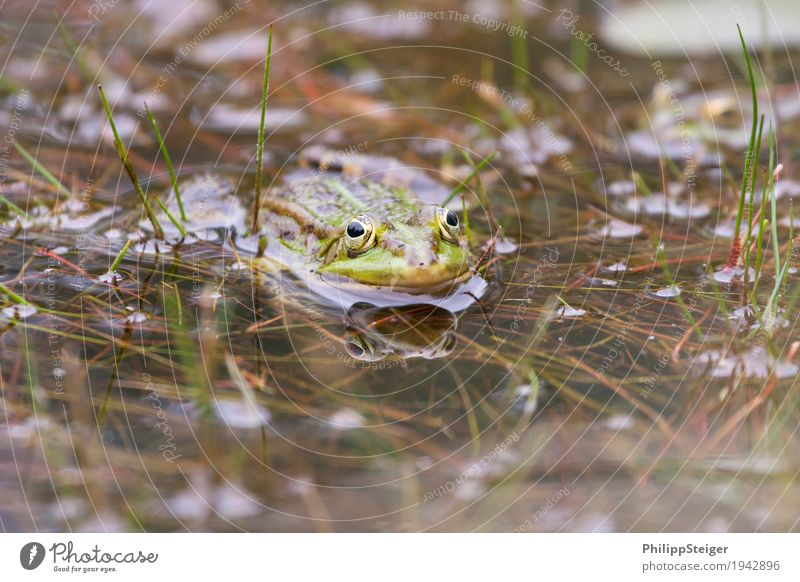 Plant Water Animal Eyes Lake Fresh Pond Frog Marsh Bog Amphibian