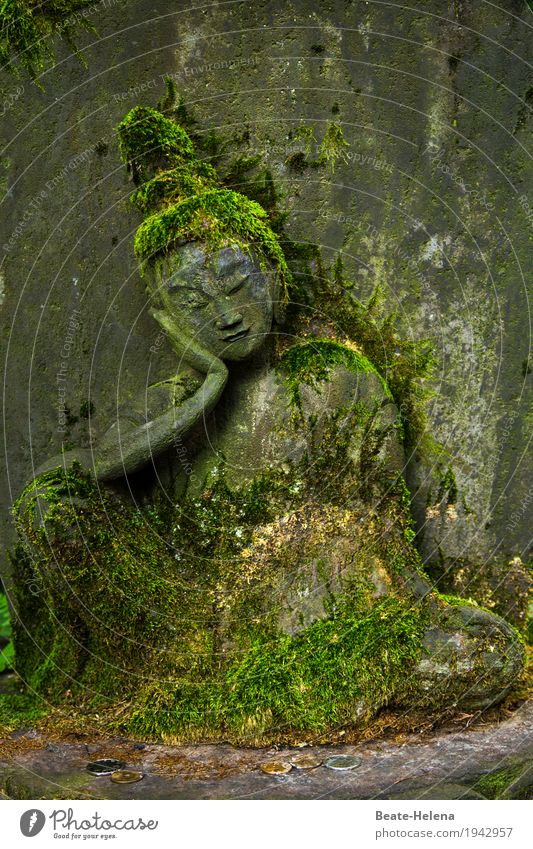 Life in the moss Elegant Beautiful Art Sculpture Foliage plant Moss Park Japan Wall (barrier) Wall (building) Stone Relaxation Vacation & Travel Esthetic
