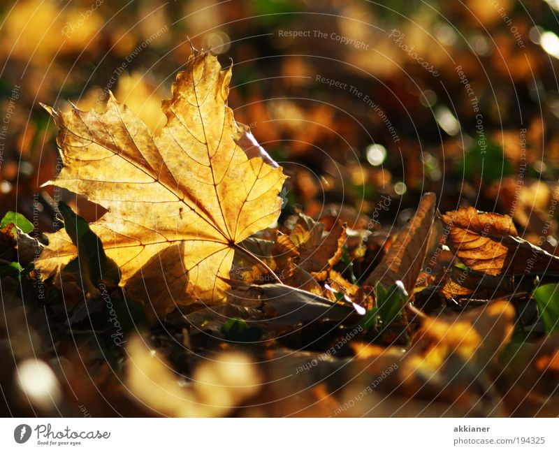 Nature Beautiful Tree Plant Sun Leaf Environment Landscape Warmth Autumn Air Bright Park Brown Earth Weather