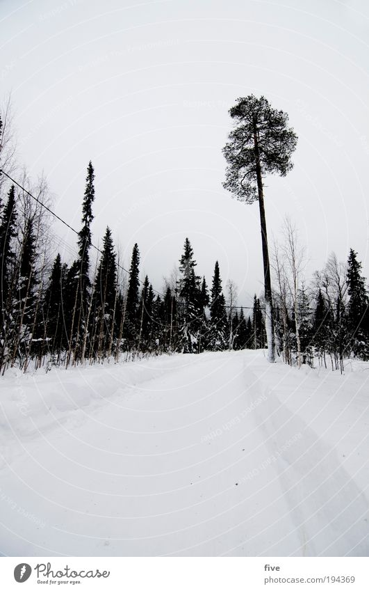 Sky Nature White Tree Plant Clouds Winter Forest Cold Snow Landscape Environment Lanes & trails Ice Wait Frost
