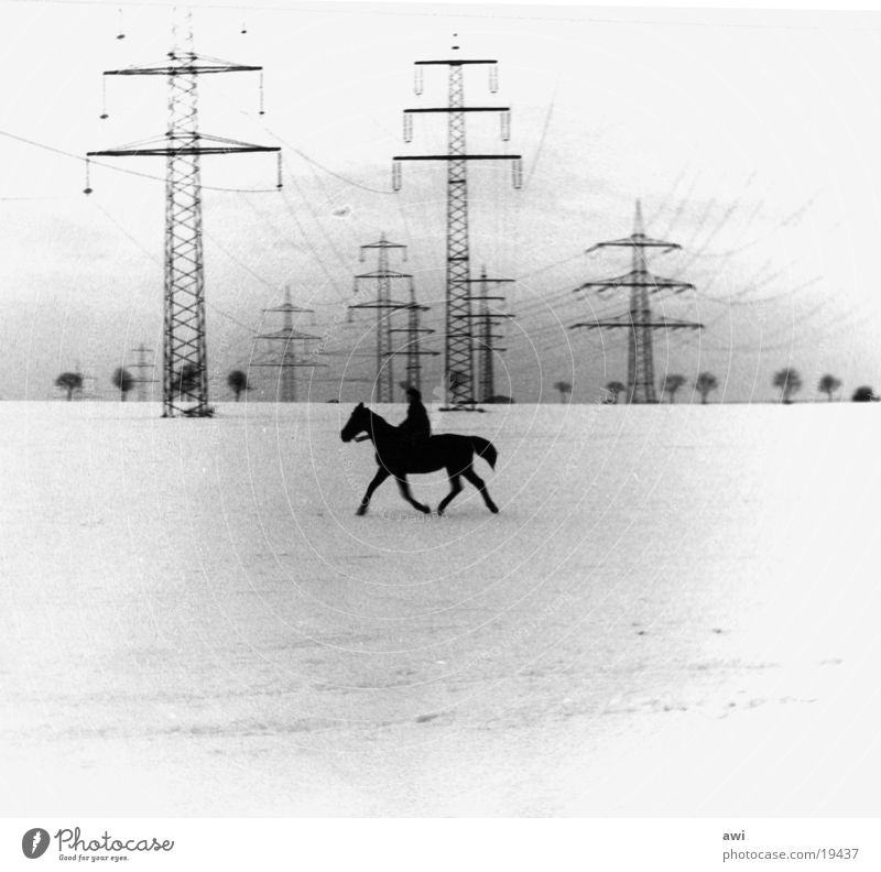 Lonely Rider Horse Field Electricity pylon Loneliness Snow Black & white photo