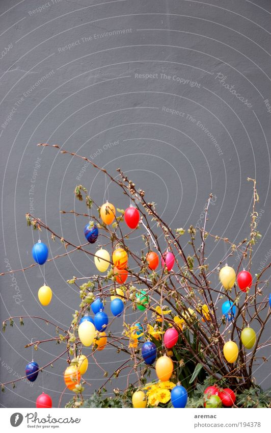 egg tree Easter Plant Spring Bushes Exotic House (Residential Structure) Wall (barrier) Wall (building) Facade Blossoming Hip & trendy Gray Kitsch Egg