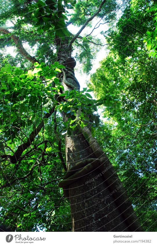 Nature Sky Tree Green Plant Summer Leaf Forest Spring Air Environment Asia Branch Wild Virgin forest Tree trunk
