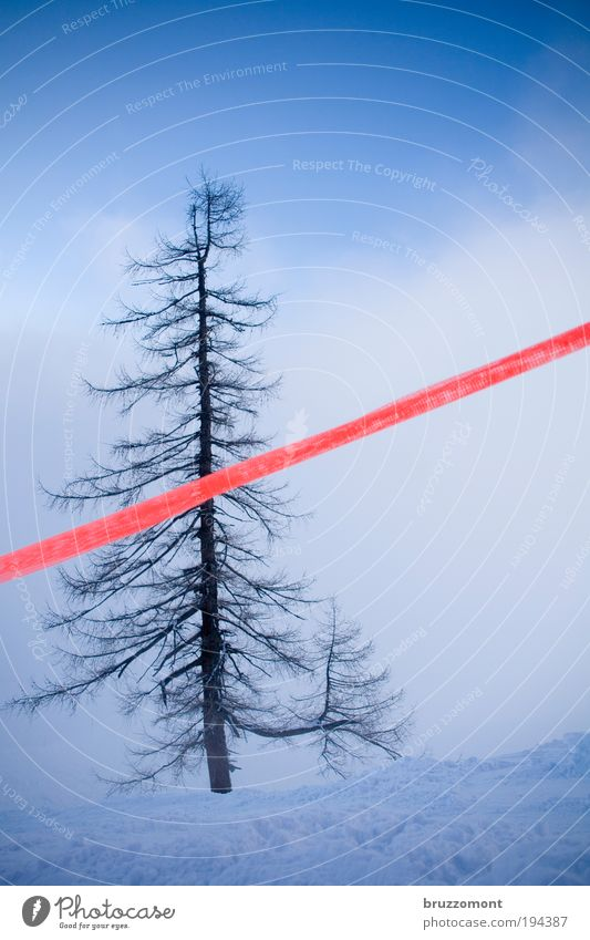 timber line Winter Snow Nature Plant Clouds Fog Tree Mountain Deserted Blue Red Bravery Self-confident Honest Loneliness Beautiful Bans Barrier Ski run