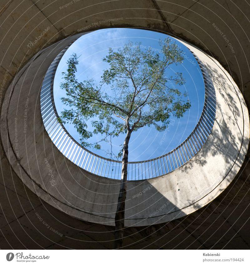 Tree Loneliness Autumn Wood Architecture Concrete Design Europe Management Brave Terrace Austria Surrealism Capital city Claustrophobia