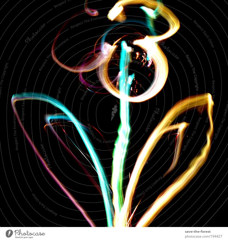 Floral glow Flower Blossom Plant Light Multicoloured Long exposure Experimental Illuminate Dark Painting and drawing (object) Artificial light