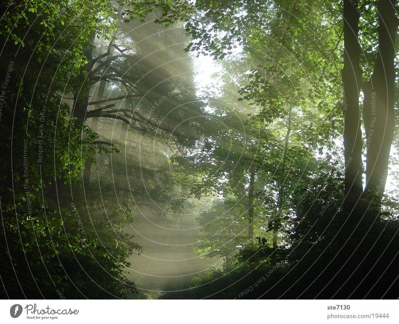 Sun Forest Fog