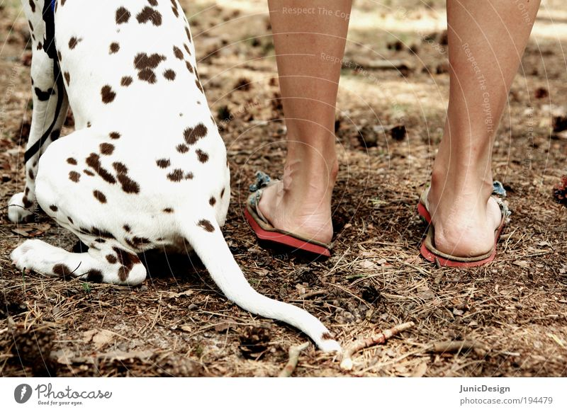 Dog Human being Nature Vacation & Travel Summer Animal Feet Brown Together Sit Free Authentic Stand Cute Trust To enjoy