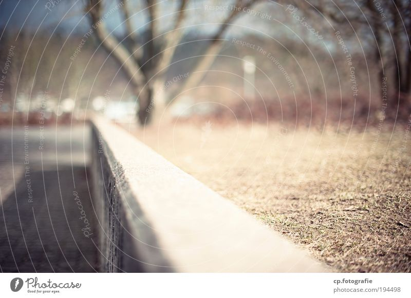 The one wall Sunlight Beautiful weather Tree Park Deserted Wall (barrier) Wall (building) Concrete Near Shallow depth of field
