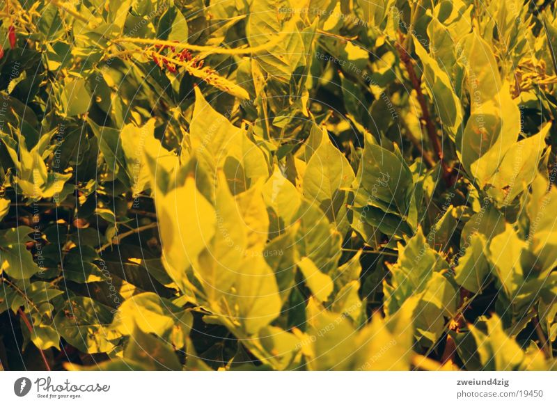 press Virgin forest Leaf Bushes Orange