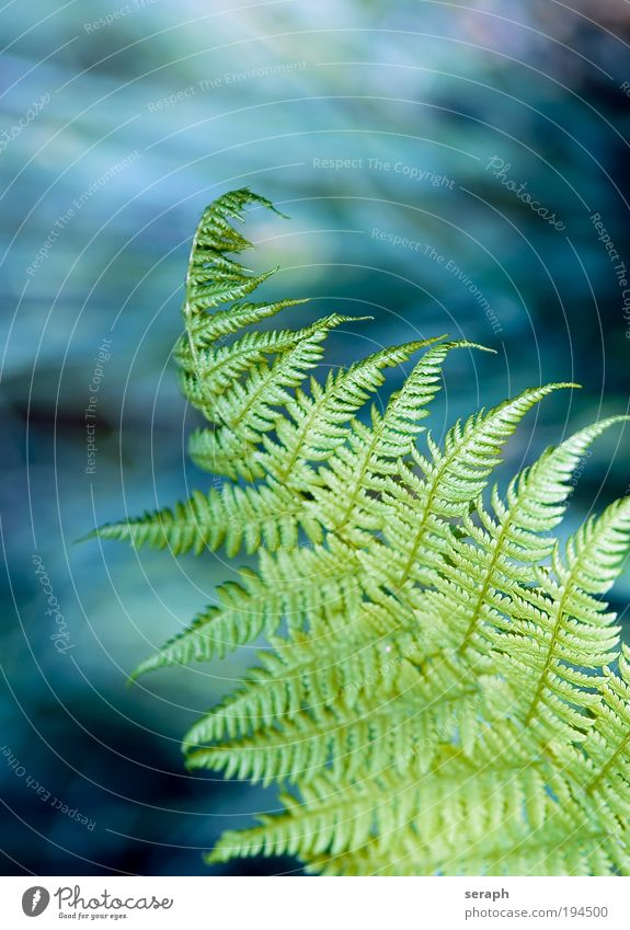 Fern Leaf Veins Blur Pteridopsida witch ladder Plant king far Nature filigree tenderly flora Botany phytology Verdant herb biology Growth spots Close-up