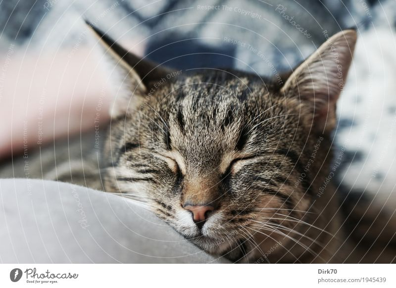 Sweet, soft and lazy Wellness Relaxation Meditation Living or residing Flat (apartment) Hand Legs 1 Human being Sunlight Beautiful weather Animal Pet Cat