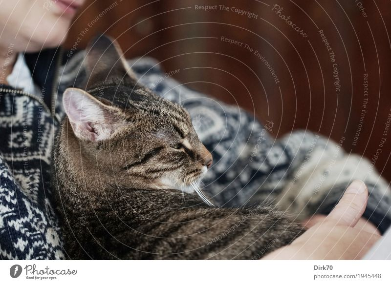 security Living or residing Flat (apartment) Living room Human being Feminine 1 Sweater Norwegian sweater Pet Cat Domestic cat Tabby cat Animal Lie Looking