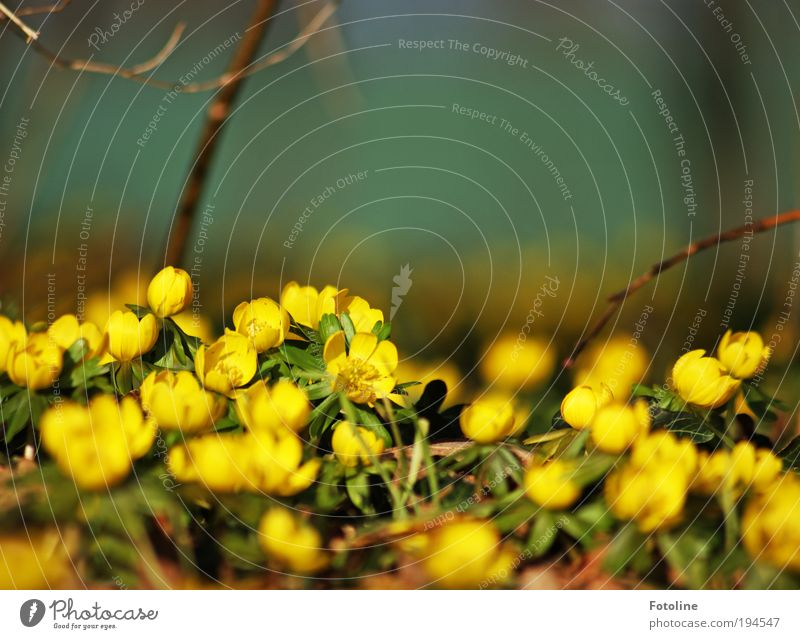Nature Beautiful Flower Green Plant Leaf Yellow Meadow Blossom Spring Park Warmth Landscape Air Bright Weather