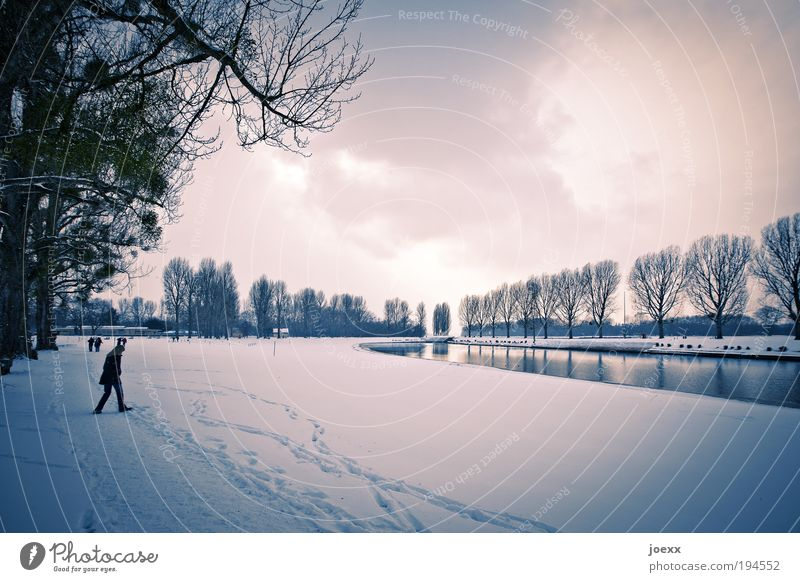 Human being Tree Winter Clouds Cold Snow Park Landscape Going Environment Pond Aggression