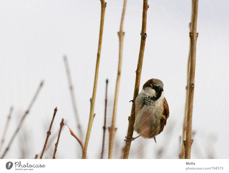 Nature Plant Animal Freedom Bird Small Environment Bushes Branch Natural Curiosity To hold on Wild animal Cute Hang