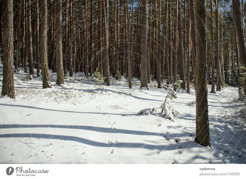 footprints Life Well-being Contentment Relaxation Calm Trip Freedom Winter vacation Hiking Environment Nature Landscape Ice Frost Snow Tree Forest Uniqueness