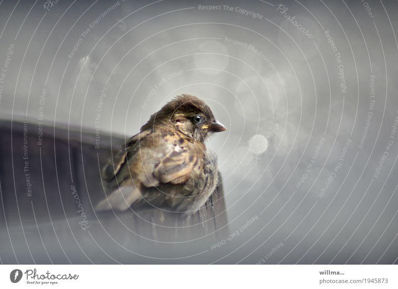 Gray Bird Cute Sparrow Songbirds Plumed Passerine bird Litterbug