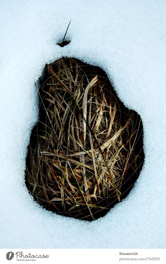 Nature Snow Grass Landscape Snowscape Thaw Earthy Tuft of grass