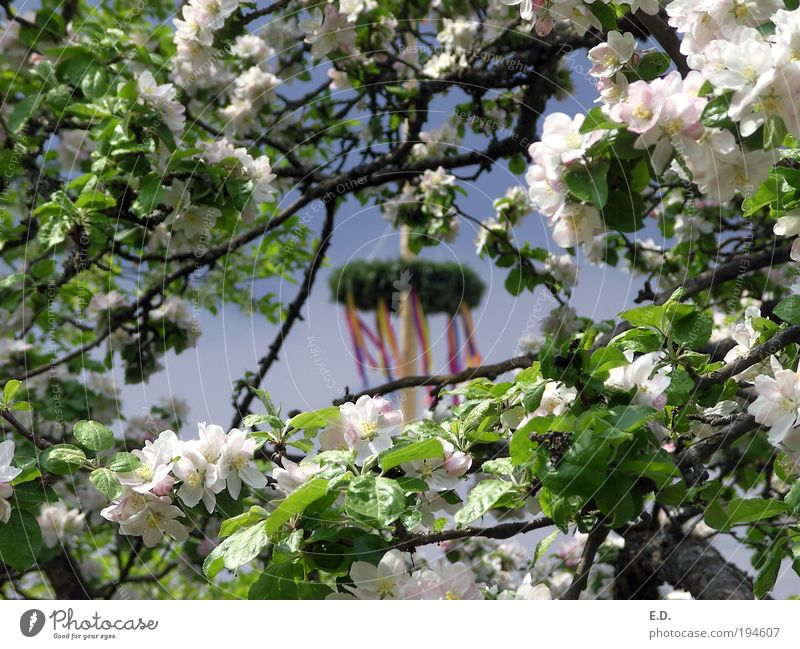 Nature Sky Tree Plant Calm Leaf Relaxation Blossom Spring Garden Dream Contentment Weather Elegant Environment Joie de vivre (Vitality)