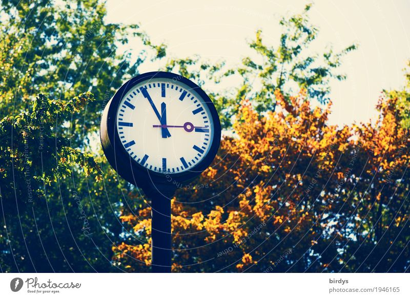 Summer Tree Leaf Autumn Time Health care Clock Fear Energy industry Branch Clock face Threat Industry Round Symbols and metaphors Fear of the future