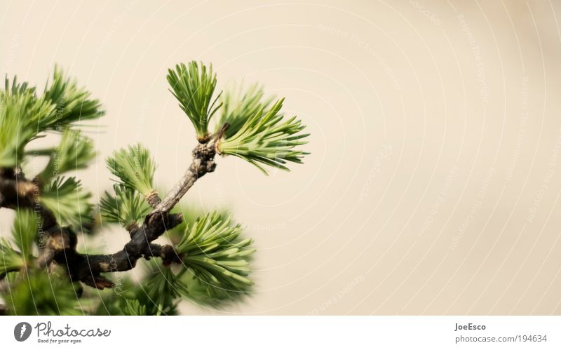 Nature Plant Beautiful Environment Spring Growth Strong Environmental protection Sustainability Foliage plant Coniferous trees Wild plant Fir needle Detail