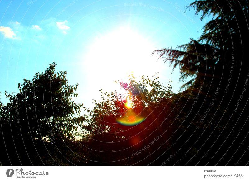 Sky Tree Sun Blue Summer Clouds Forest Garden Lens flare