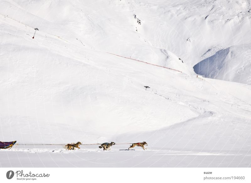 sixpack Winter vacation Environment Snow Alps Mountain Animal Pet Farm animal Dog Group of animals Running Movement Driving Bright Cold White Endurance Sled dog