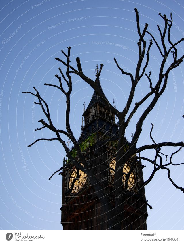 Old Blue Tree Vacation & Travel Architecture Religion and faith Brown Tourism Church Tower Culture Historic Landmark London Wanderlust