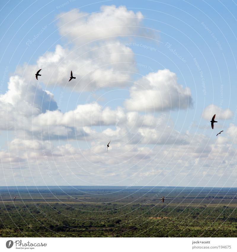free like a bird Far-off places Safari Nature Landscape Animal Sky Clouds Summer Climate change Warmth Savannah Kenya Flying Simple Blue Green Contentment Power
