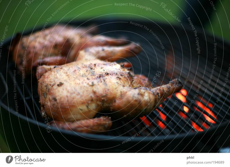 have a barbecue Food Meat Nutrition Lunch Dinner Barbecue (event) Barbecue (apparatus) Barn fowl Chicken Lifestyle Joy Skin Camping Feasts & Celebrations Animal