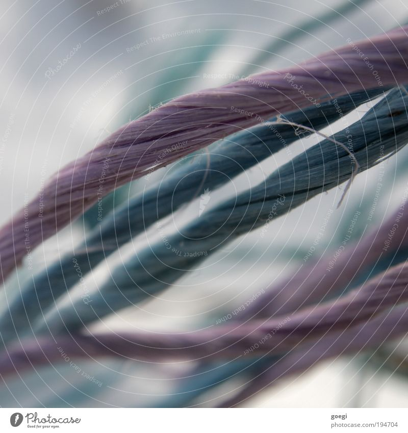 Blue Rope Violet Stripe String Plastic Chaos Bow Untidy Fastening Distorted Material Rotated