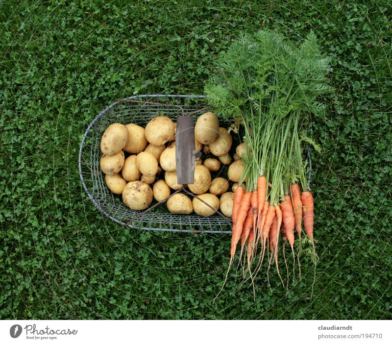 healthy food Food Vegetable Potatoes Carrot Nutrition Organic produce Vegetarian diet Healthy Gardening Summer Agricultural crop Field Fresh Green Growth