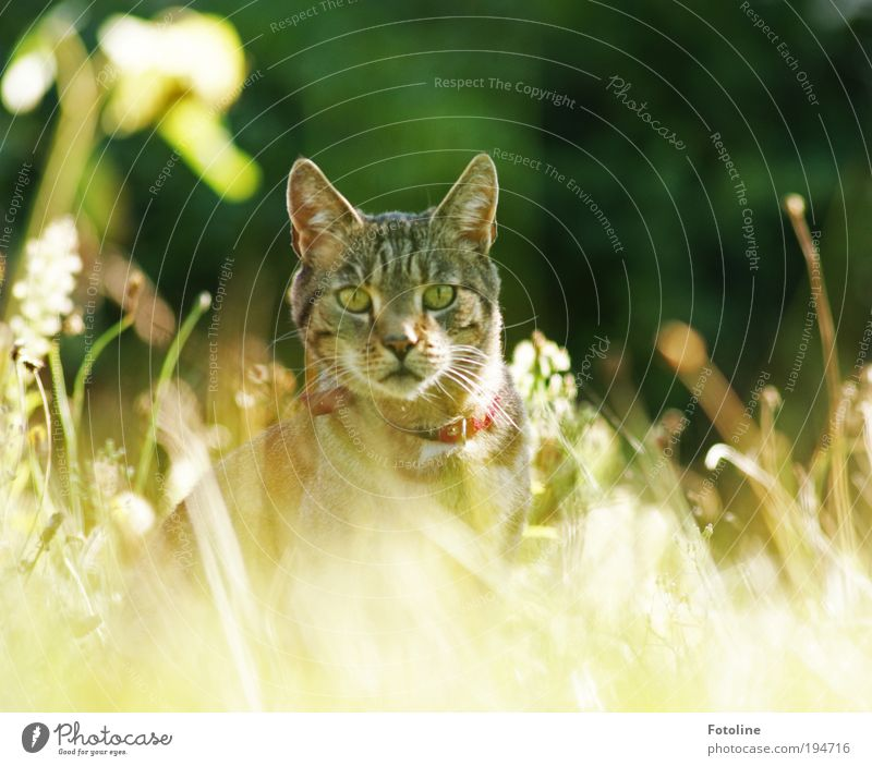 I see you! Environment Nature Landscape Plant Earth Sun Sunlight Summer Climate Weather Beautiful weather Warmth Grass Garden Park Meadow Animal Pet Cat