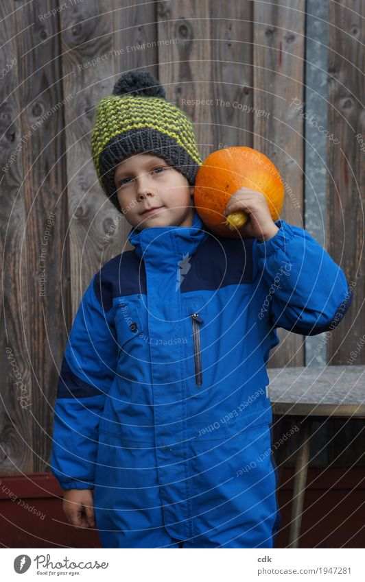 pumpkin harvest Masculine Child Infancy 1 Human being 3 - 8 years Nature Autumn Winter Agricultural crop Garden Field Cap Authentic Simple Friendliness Fresh