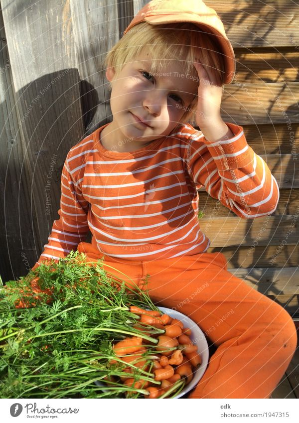 Autumn Garden Orange Infancy Fresh Authentic Beautiful weather Delicious Carrot