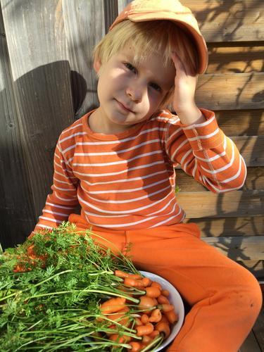 Autumn Garden Orange Infancy Fresh Authentic Beautiful weather Delicious Carrot