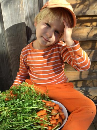 Harvest - small but fine! Autumn Beautiful weather Carrot Garden Authentic Fresh Delicious Orange Infancy Colour photo Exterior shot Day Light Shadow