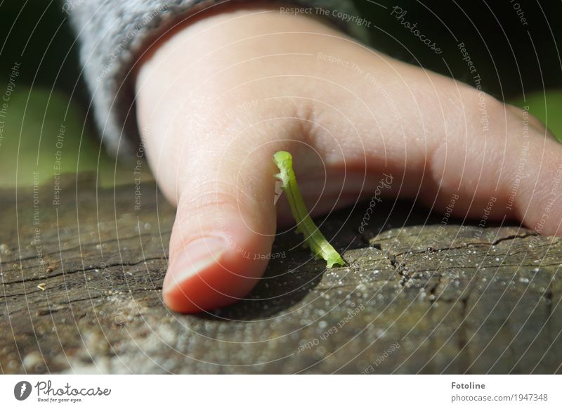 Contact Feminine Child Girl Infancy Skin Hand Fingers 1 Human being Environment Nature Animal Summer Beautiful weather Garden Worm Small Natural Green