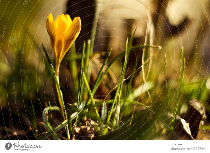 Nature Beautiful Flower Plant Summer Leaf Yellow Meadow Blossom Grass Spring Happy Park Environment Free Happiness