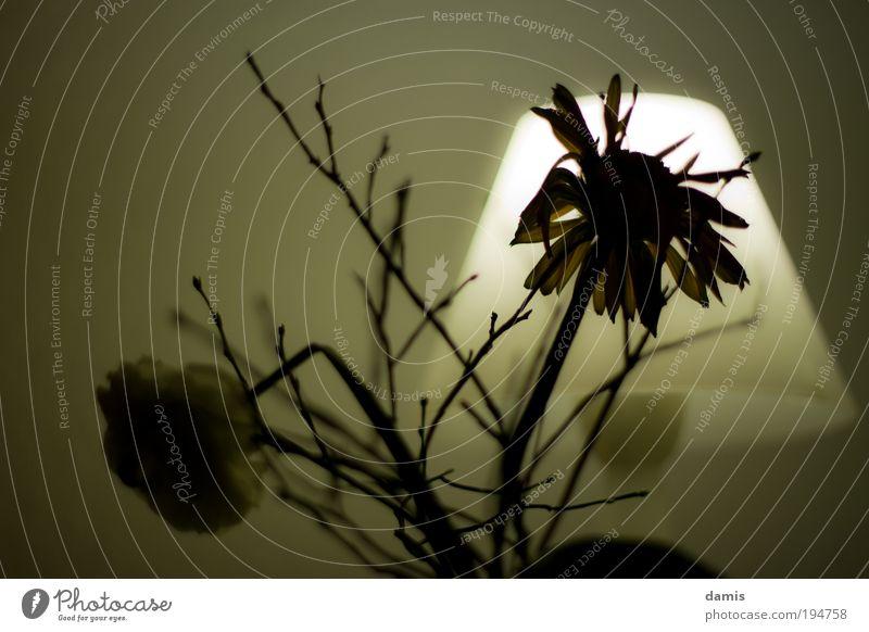 Old White Green Plant Flower Black Dark Death Cold Sadness Lamp Brown Poverty Illuminate Decoration Gloomy