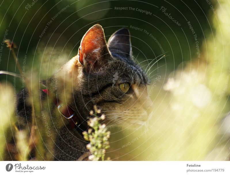 Hunting Environment Nature Plant Animal Summer Climate Weather Beautiful weather Warmth Grass Garden Park Meadow Pet Cat Animal face Pelt 1 Hot Bright Curiosity