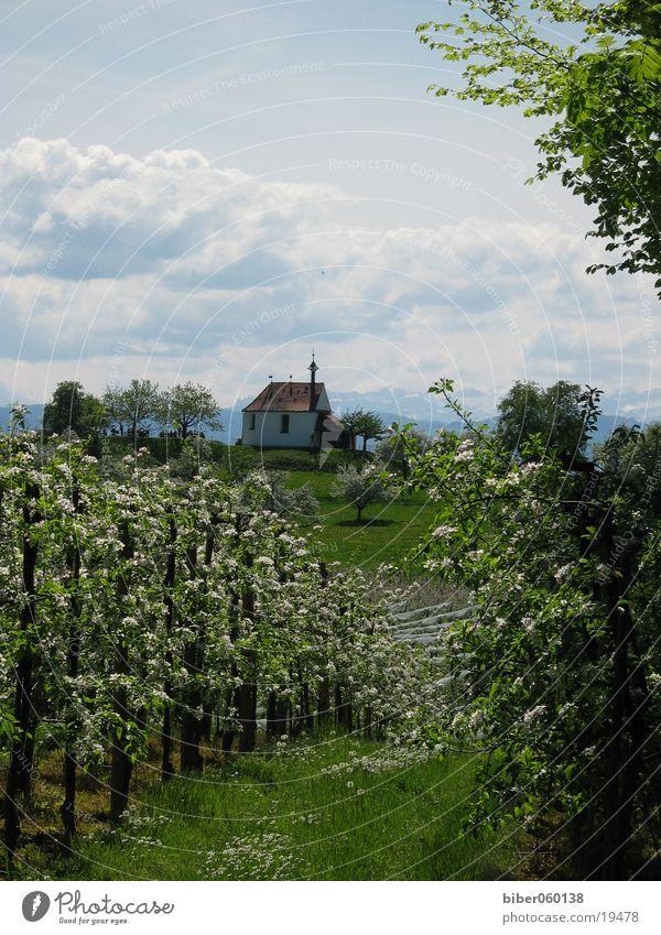spring Mountain Lake Constance Kressbronn tree blossom little church