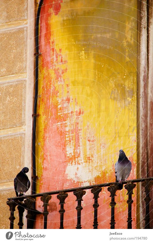 Vacation & Travel Beautiful Summer Red Animal Yellow Warmth Freedom Bird Together Facade Tourism Communicate Joie de vivre (Vitality) Spain Mediterranean