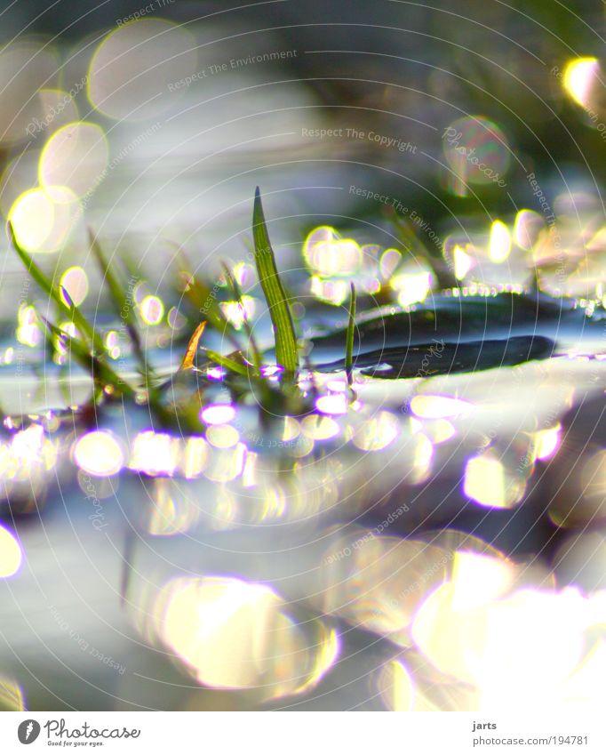 Nature Water Sun Plant Summer Calm Spring Rain Environment Fresh Climate Natural Idyll Lake Serene Fluid