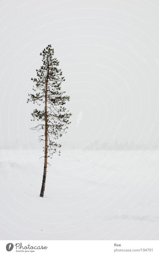 Nature White Tree Plant Vacation & Travel Winter Far-off places Cold Snow Freedom Landscape Environment Power Fog Climate Infinity