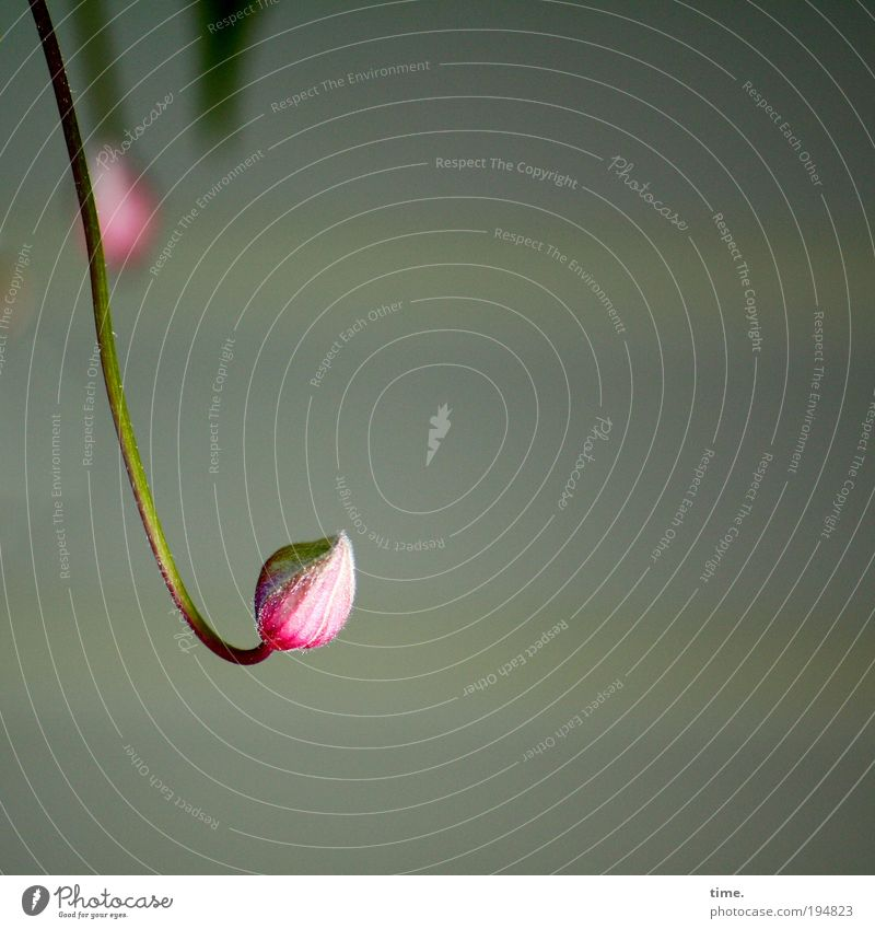Plant White Red Joy Warmth Blossom Spring Gray Pink Growth Curiosity Living thing Depth of field Curve Vertical Frontal
