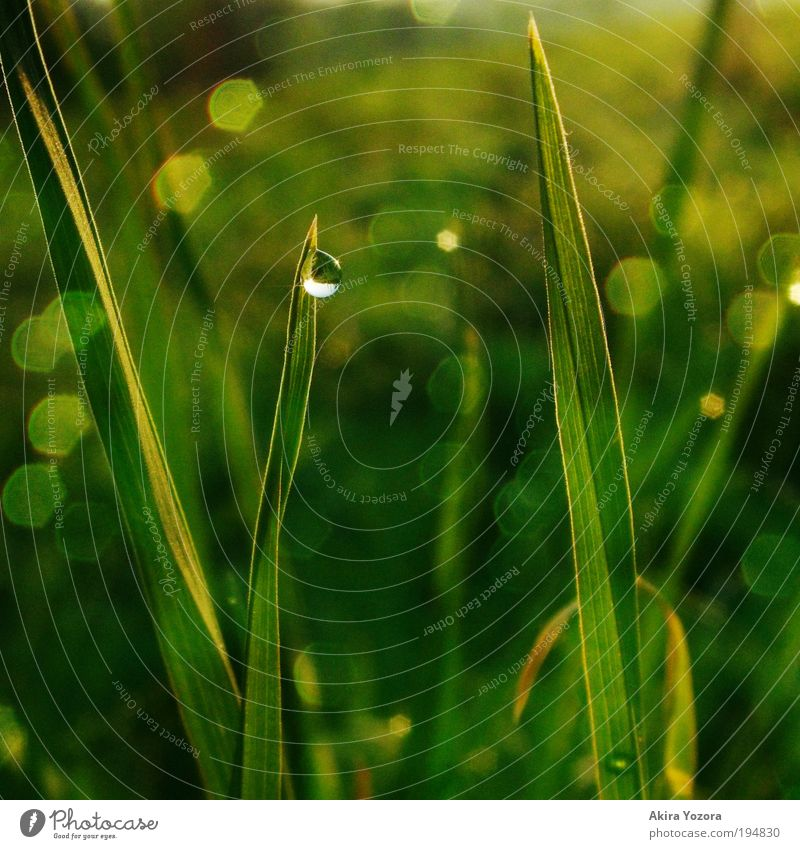 Nature Green White Black Yellow Spring Meadow Grass Natural Glittering Growth Illuminate Esthetic Drops of water Wet Romance