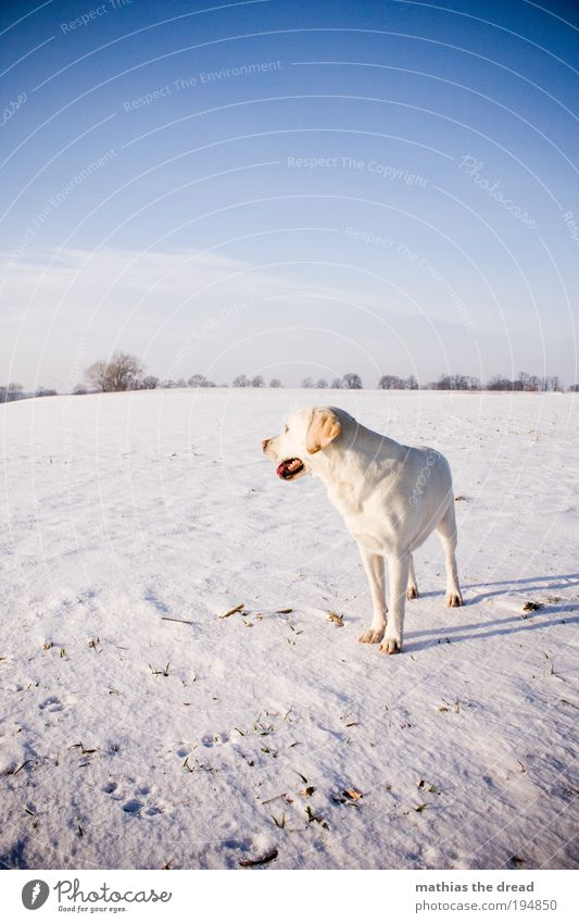 ONE LAST LOOK Environment Nature Landscape Sky Clouds Horizon Sunlight Winter Beautiful weather Ice Frost Snow Plant Tree Meadow Field Animal Pet Dog 1 Observe