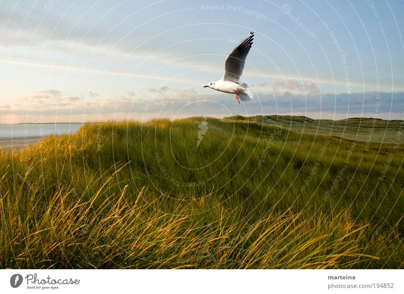 pure nature Environment Nature Landscape Air Water Sky Sunlight Climate Weather Beautiful weather Plant Grass Wild plant Coast North Sea Animal Bird 1 Flying